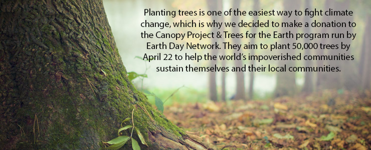 why planting trees can combat climate change