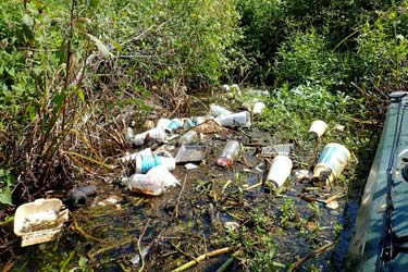 Plastic litter discarded into swamp